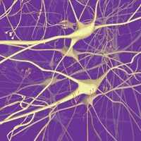 Зрелые клетки мозга