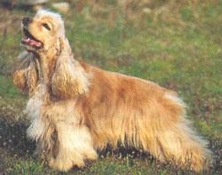 Собаки помогают диагностировать рак